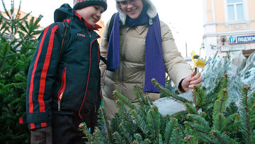 Томских коров угостят новогодними елками