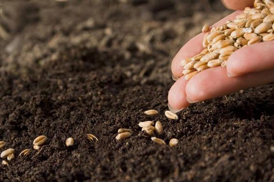 как подготовится к весенне полевым работам