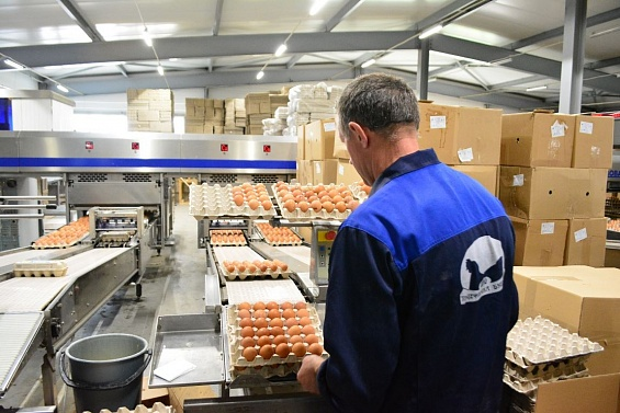 Птичий грипп обнаружен на птицефабрике в Костромской области