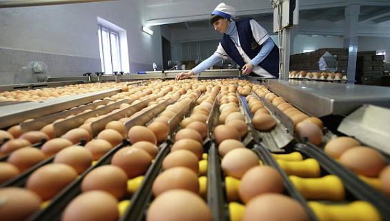 В Липецкой области построят репродуктор инкубационного яйца мощностью 24 млн яиц в год