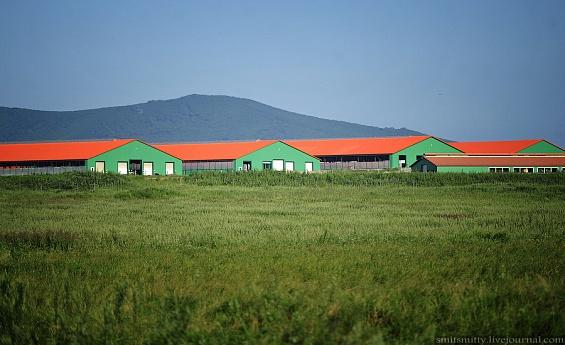 «Грин Агро» инвестирует 3,5 млрд. рублей в реализацию шести проектов в сфере животноводства в Приморском крае